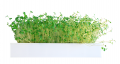 EcoQube Sprout - The First Hydroponic, Stackable MicroGarden